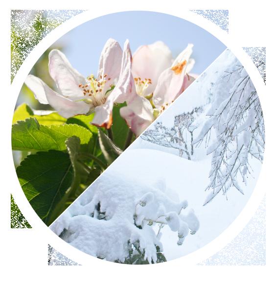長野県のりんご通販|Su-eat Farm APPLE(スイートファーム・アップル)のこだわり・温度差・寒暖差