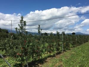 長野県小布施町・産地直送のりんご通販ショップ Su-eat Farm APPLE(スイートファーム・アップル) シナノドルチェ