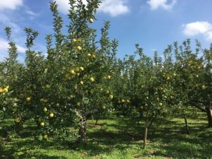 長野県小布施町・産地直送のりんご通販ショップ|Su-eat Farm APPLE(スイートファーム・アップル)|gold4