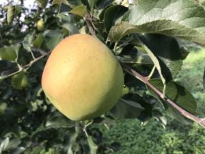 長野県小布施町・産地直送のりんご通販ショップ|Su-eat Farm APPLE(スイートファーム・アップル)|りんごショップ_ぐんま名月