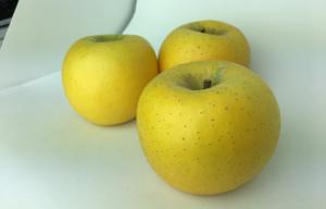 長野県小布施町・産地直送のりんご通販ショップ|Su-eat Farm APPLE(スイートファーム・アップル)|shinanogold_03