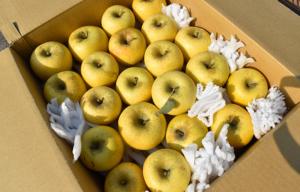 長野県小布施町|産地直送のりんご通販サイトSu-eat Farm APPLE(スイートファームアップル)|shinanogold_04