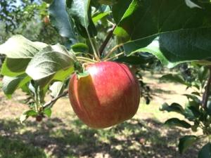 長野県小布施町・産地直送のりんご通販ショップ Su-eat Farm APPLE(スイートファーム・アップル) つがる