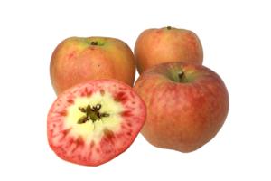 果肉が赤いりんご ムーンルージュ